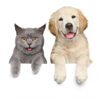 Email Sign Up Cat and Dog